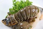 龍蝦尾(約300g)