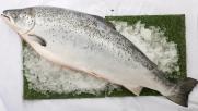 三文魚(原條,約6K可刺身)